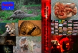 1. PANGOLIN SCALES ARE MADE UP OF KERATIN (SIMILAR TO HUMAN HAIR OR NAILS) - IT CAN NEVER BE MEDICINE FOR ANYTHING | IT CURES NOTHINNG | ONLY REINFORCES GREED AND IGNORANCE 2. PANGOLIN FETUSES CAN AND WILL NEVER BE AN APHRODISIAC | GET VIAGRA 3. PANGOLIN CAN NEVER BE AND SHOULD NEVER BE AN INGREDIENT FOR ALCOHOL | GET SERIOUS | BE CIVILIZED +++ IN MEMORY OF COUNTLESS UNKNOWN PANGOLIN KILLED BECAUSE OF IGNORANCE AND GREED